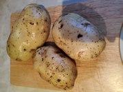 Картофель оптом на прямую от фермера